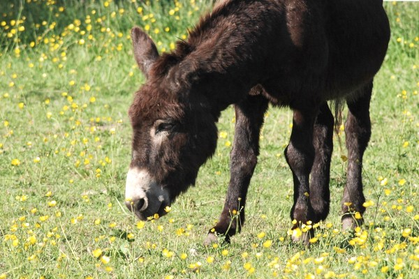 Esel in Nadelstreifen